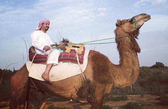 camel seite 1